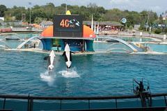 Marineland 40me Anniversaire (__REN__) Tags: france paca dauphin antibes marineland sud otarie orque ourspolaire parcaquatique