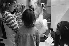 -4 / In the Darwinian museum-4 (Vadim_Prischepa) Tags: bw film 35mm russia moscow voigtlander bessar ilford ddx 13min hp51600 epsonv700 colorskopar3525 randgefinder