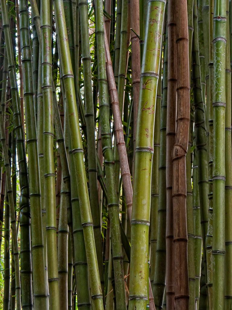 Jardin bambu beautiful fuente jardin bambu h with jardin for Jardin bambu