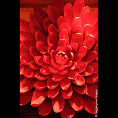 Red (HoangHuyManh images) Tags: flower niceshot musictomyeyes redgroup blackgroup bluegroup flickrgoldaward greengroup flickrsilveraward encorehotel whitegroup doublyniceshot mygearandme mygearandmepremium hoanghuymanhimages dblringexcellence level2photographyforrecreation artistoftheyearlevel2 qualifiedmemberonlylevel2 theelitephotographerlevel2 artistoftheyearleve3 platinumheartawardlevel2 theelitephotographerlevel5 yelowgroup theelitephotographerlevel3 theelitephotographerlevel4