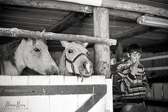Horse farm. Rnov, Romania (Mihai Biri) Tags: bw horse farm cigarette smoke romania brasov rasnov thedefiningtouch deftouch
