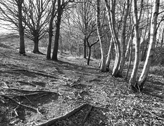 Winter path #2 (IanSeccombe) Tags: trees winter monochrome landscape redhouse common chaielycommons