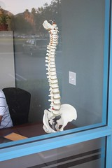 Spine Display