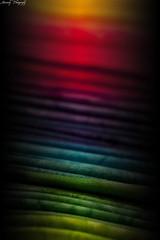 Sunrise of Possibilities (Noctem Wolf) Tags: stilllife closeup canon rebel rainbow colorful raw fabric gradient canondigitalrebel 365 linear