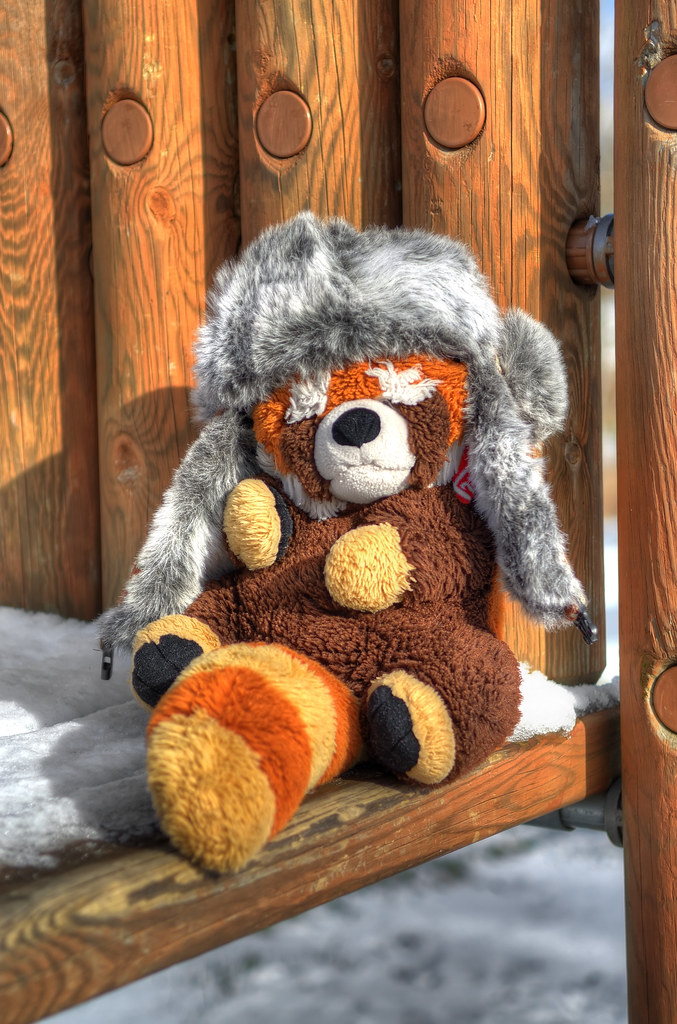 Red raccoon wearing a fur hat