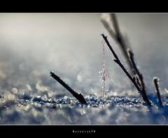 Little sparkle world, on ice (Borretje76) Tags: takje twijgje koud ijs sneeuw kristal kristallen bevrored meertje natuur glimmen glinster glinstering glinsteren crystal crystals freesing borretje76 enschede sigma 180mm macro netherlands sony dslra580 f63 iso100 gupr