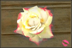 The Faded Rose. (Megspics .) Tags: flower macro rose letters romance faded