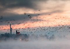 The Birds (Hannes R) Tags: morning winter sky cloud seagulls mist lake blur cold bird water birds fog clouds dawn day sweden stockholm seagull gull gulls smoke motionblur skeppsholmen strmmen stockholmsstrm
