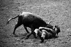Come on Down, Plate 3 (Thomas Hawk) Tags: bw usa cowboy texas unitedstates unitedstatesofamerica bull rodeo dfw fortworth fav10 fortworthstockshowrodeo fortworthstockshowandrodeo dmudallas012011