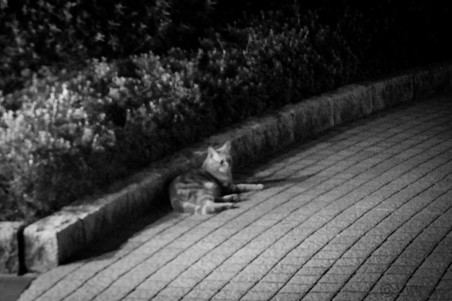 Today's Cat@2014-03-24