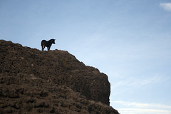 Dog on Isla Incahuasi (sophs123.) Tags: chile travel summer dog nature animals silhouette america canon de landscape san tour flat wildlife south salt pedro atacama latinoamerica uyuni bolvia canon400d