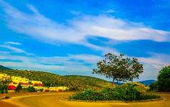 Karmiel, Israel (zingeramit263) Tags: blue sky sun green nature yellow canon israel outdoor karmiel sx710hs