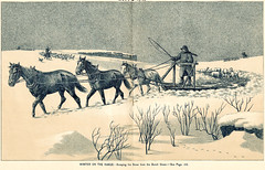 Winter on the Range - Scraping the Snow from the Bunch Grass (WA State Library) Tags: westshore newspapers washingtonterritory
