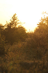 Noordhollands duinreservaat - Terrein Bakkum (merijnloeve) Tags: holland netherlands sunrise zonsondergang sundown dunes nederland natuur duinen terrein bakkum noordhollands duinreservaat