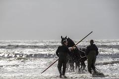 2016-Ameland042 (Trudy Lamers) Tags: wadden ameland eiland paarden reddingsboot reddingsactie