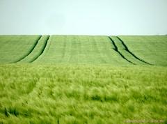 Traces (FleurdeLotus28) Tags: green nature field spring perspective trace vert line sillon minimalism paysage campagne printemps champ ligne beauce bl minimalisme eureetloir trac rgioncentre