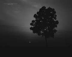 monochromatic evening ... #galaxys6 (istiaque.mohammad) Tags: sunset sky sun india white black tree nature mobile photography evening still samsung monochromatic smartphone galaxy mobilephone phonecamera s6 westbengal mobilography phonography arambagh vsco androidography