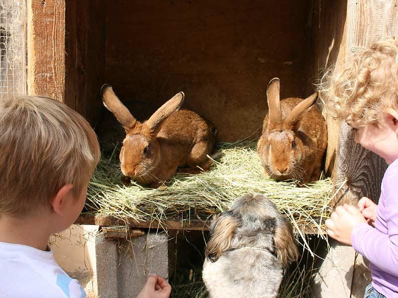 Ferienwohnungen Selz - Kinder füttern Hasen
