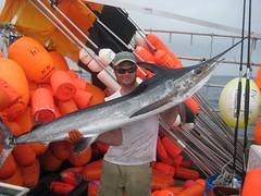 Marlin, Bear Seamount 200 miles SE of Nantucket (davensuze3) Tags: delete10 delete9 delete5 delete2 delete6 delete7 delete8 delete3 delete delete4 save save2 marlin deletedbythehotbox davensuze3