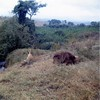 Simba and Nala on Pride Rock. Simb…