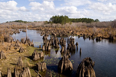 West Arm Creek (The Goat Whisperer) Tags: west creek arm florida stump cypress knees wewahatchka