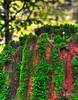 Mushroom doesn't need a parachute – another Darwin Award but I'm not the jumper (janusz l) Tags: red cliff west green mushroom rain forest coast moss small award darwin cedar imagination redwood stomp hdr parachute chilliwack janusz leszczynski bokah dec92011001108