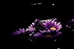 (Naina Iqbal) Tags: noflash naina hunaina nainaphotography hipstamatic americanalens blankofreedom13film