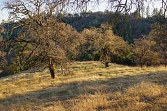 2011-12-04 Morgan Hill, Henry W. Coe State Wilderness Park 039.jpg