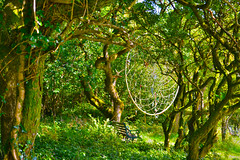 Dreamcatcher (stowill) Tags: wales forrest dream mystical spiritual fairys enchanted dreamcatcher faries