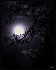 The Mists of Time (Sheree (Here intermittently)) Tags: winter misty cloudy winner cy picnik a challengeyouwinner moonshereezielkemarthasmirrormarthasvinealbertaphotographerbranches nightskywintersky planningavisittonewyorkagents