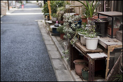 Garden on the street (Eric Flexyourhead) Tags: road street city urban plants japan garden tokyo small   narrow potted taitoku yanaka taito   olympusep1 voigtlandernokton25mmf095