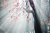 .....  E luce fu !! (Riccardo Brig Casarico) Tags: morning autumn light italy sun flower tree colors alberi wow photography photo reflex nikon europe italia colours foto details fantasy dettagli fotografia nikkor sole autunno colori atmosfera luce brig giorno riki boschi atmosphre d5100 gennaio2012challengewinnercontest brigrc