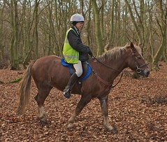 Juliette - Boxing Day Ride (Peter J Dean) Tags: christmas horse garden chilterns buckinghamshire welsh legend juliette canonef2470mmf28lusm dunsmore canonef2470mmf28l sectiond rowanbank canon7d