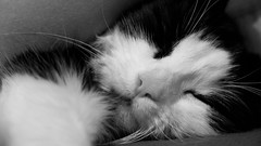 My Cat - So beautiful (plane-spotter31) Tags: sleeping white black france beautiful look cat wonderful french eyes kiss chat europe noir style yeux belle hugs toulouse glance blanc beau sweety regard couette sublimate
