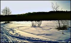 Winter (Steffi-Helene) Tags: winter nürnberg landschaften