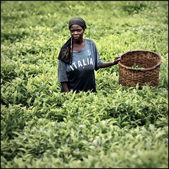 Italia.......siamo al verde! (cisco image ) Tags: portrait verde green canon square donna italia tea rwanda hills cisco soul plantation job ritratto greeen colline 500x500 presenze nyungwe soulsound kibanza eos5dmarkii bestportraitsaoi gennaio2012challengewinnercontest