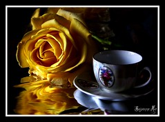 TeaTime Rose (Suzanne Mc) Tags: autumn dublin black flower reflection cup floral rose reflections soft pretty tea foil petal bud thorns teatime autumnal saucer edges yellowwhite westdublin chapelizod beauliful