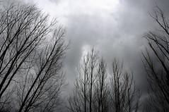 semicerchio (Filippo1964) Tags: italy alberi italia nuvole campania inverno pioggia freddo avellino semicerchio irpinia