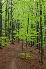 """Neon Canopy • <a style=""""font-size:0.8em;"""" href=""""http://www.flickr.com/photos/55747300@N00/6650445427/"""" target=""""_blank"""">View on Flickr</a>"""