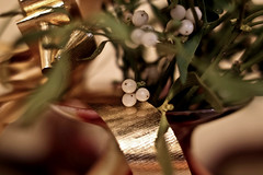 magic mistletoe (lucia bianchi) Tags: lights soft shine atmosphere mistletoe bacche vischio proveconil50mm