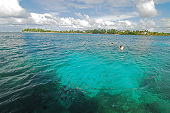 MUS-Blue Bay-0805-11-v1 (anthonyasael) Tags: ocean africa travel blue school sea 2 two sky people cloud fish seascape color tree nature water animal animals horizontal swimming swim island person bay scenery snorkel natural time turquoise ripple maurice scenic free lifestyle scuba diving scene calm adventure explore tropical anthony destination environment leisure shallow activity mauritius distance exploration discovery idyllic tranquil distant themes expanse ilemaurice unrecognizable asael of