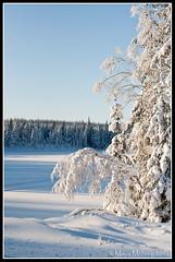 Snow (mmoborg) Tags: winter lake snow cold kyla frozen vinter sweden sverige snö dalarna 2012 sjö koppången mmoborg mariamoborg