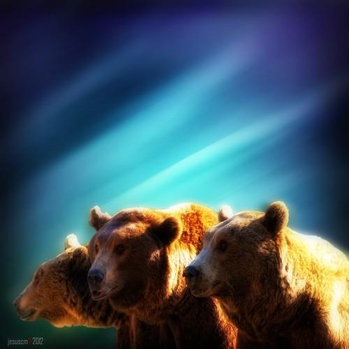 trio de osos • trio of bears