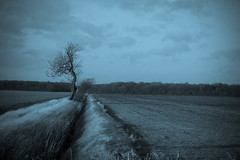 Winter Tree (jillyspoon) Tags: tree field rural landscape farm farming lincolnshire agriculture gnarled willingham onetree fillingham