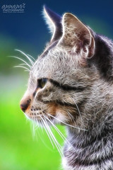 Tanpa Nama (AnNamir™ c[_]) Tags: animal cat canon fractal 75300 kucing 500d wow1 wow2 wow3 wow4 wow5 fractalius annamir fractallius kucingdalamislam tanpanama