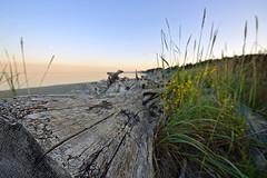 DRIFTWOOD SUNSET (6) (DESPITE STRAIGHT LINES) Tags: trees sunset sea canada tree beach water island nikon bc britishcolumbia driftwood goldenhour islandviewbeach saanichton islandview d700 nikond700 ilobsterit