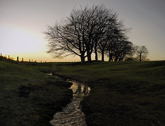 JANUARY GLOAMING (kenny barker) Tags: trees winter colour nature landscape lumix scotland january falkirk bonnybridge antonineswall panasonicgf1 kennybarker