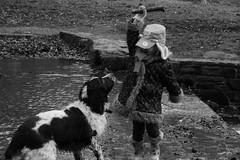 IMG_1588 (keith portlock) Tags: bw dogs water canon sticks blackwhitephotos eos60d
