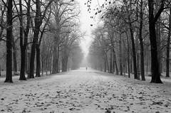 melancholy ([ Chiara ]) Tags: bw foglie alberi parma viale parcoducale