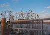 Frosted Fence (Ivan Naurholm. thanks, for more than 500.000 views) Tags: blue winter light sun sunlight fence copenhagen denmark frozen gate frost post bokeh straw bluesky wintersky ginordicjan12